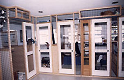 Typical cat rooms with lofts